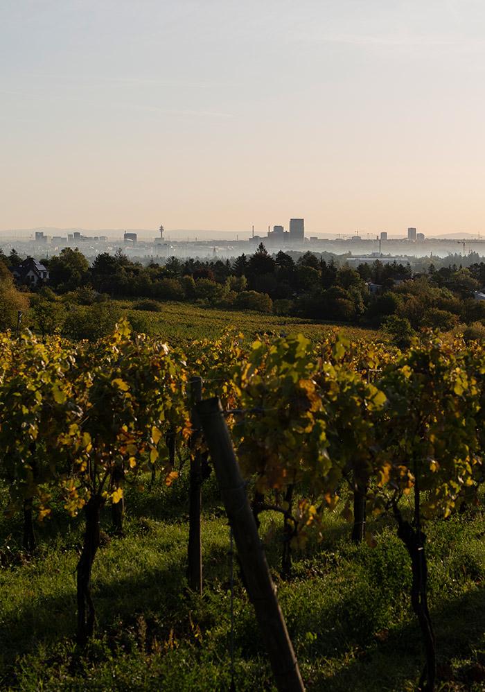 Zahel – Weingut und Heuriger